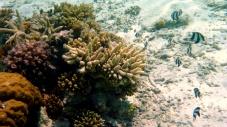 Coral Blocks