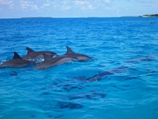 Super pod of Dolphins