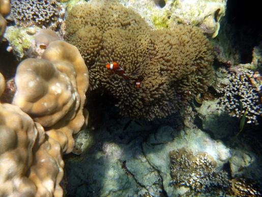 Nemo again